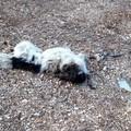 Carcassa di cane ritrovata in agro di Terlizzi