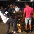 Mercato ortofrutticolo: Il fiorone Mang Tauro
