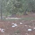 Campagne rifiuti