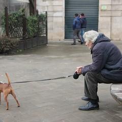 Benedizione di animali JPG
