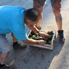 Il fiorone menghtaur al mercato all'ingrosso di Terlizzi