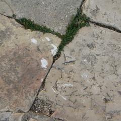 Pavimentazione rovinata JPG