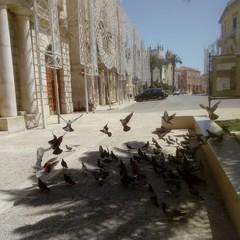 Piccioni in piazza Cavour
