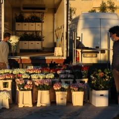 Riapertura mercato dei fiori fase JPG