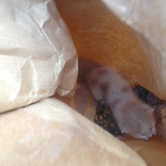 Salvato gattino dai Vigili del Fuoco JPG