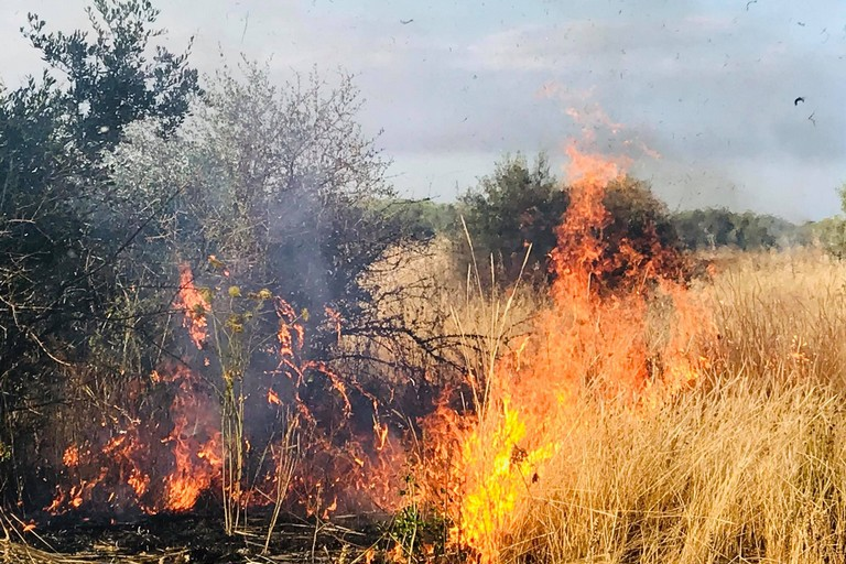 Fiamme in un terreno