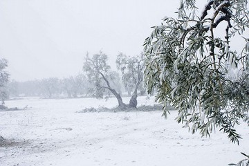 neve campagna