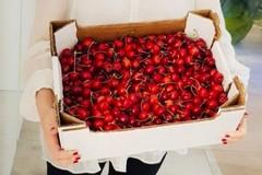 Spot per le ciliegie terlizzesi da Giorgia Meloni
