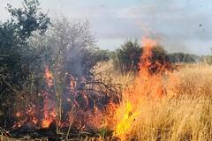 Di nuovo fiamme in via Chicoli (FOTO e VIDEO)