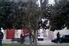 Una quercia in memoria di Antonio Grieco