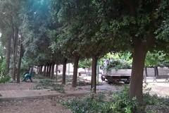 Legambiente Terlizzi: «Sugli alberi di Parco Marinelli si facciano scelte ponderate»