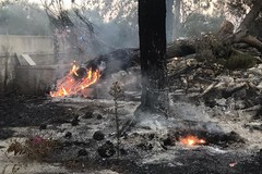 Incendio sulla via Appia Traiana: bruciano 500 metri quadri di verde