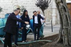 """L'ulivo di piazza Plebiscito diventa """"monumentale"""" protetto"""