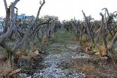 Puliamo Terlizzi: alberi morti anche nell'area verde di Via Giovanni Paolo II