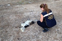 Ritrovata carcassa di un cane con ferite da trascinamento