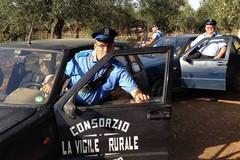 Sventato un furto di uva da tavola dalla Vigile Rurale, ladri in fuga