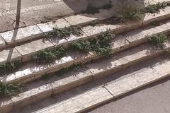 Erbacce per strada a Terlizzi. Grassi ironico: «Mandiamo le capre a brucare»