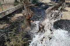 Ancora incendi nelle campagne terlizzesi
