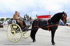 Oggi a Terlizzi  carrozze e traini, cavalli e cavalieri, vestiti con i costumi della tradizione contadina