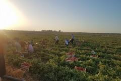 Stop al lavoro nei campi nelle ore più calde del giorno