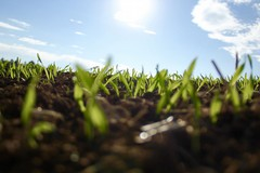 Lezioni contadine dal campo al web: ecco l'agrididattica a distanza