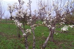 Anche a Terlizzi colture in difficoltà. Coldiretti Puglia: «Quarto autunno più caldo dal 1800»