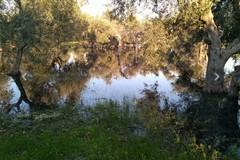 Problemi al depuratore consortile di Ruvo e Terlizzi, acque reflue a Torre Calderina