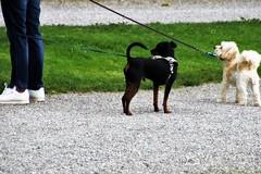 Sospesa ufficialmente la regolamentazione dell'orario di passeggio per gli animali