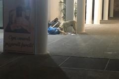 Animali alla ricerca di cibo tra i rifiuti in Largo Torino