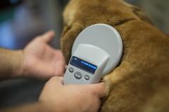 Cani e microchip: scattano i controlli nei parchi di Terlizzi