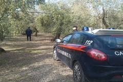 Assalti a mano armata nelle campagne di Terlizzi