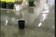 """""""Piove"""" nel mercato dei fiori, l'ira della CIA"""