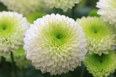 Ognissanti e commemorazione dei defunti, due pugliesi su tre portano fiori al cimitero