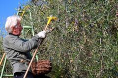 La paura in agricoltura, ronde per evitare furti di uva e olive