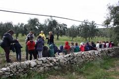 Festa dell'Albero speciale nell'azienda agricola Colle Optimo. Le FOTO