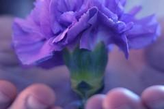 """""""Fiore di maggio"""": la Caritas diocesana a supporto del settore florovivaistico di Terlizzi"""
