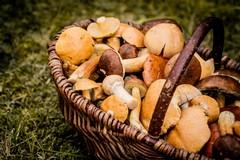 Il Comune di Terlizzi promuove un corso per il riconoscimento dei funghi