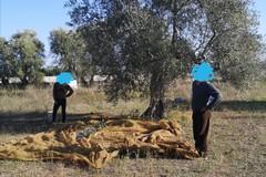 Non solo ladri di olive, anche clandestini: denunciati ed espulsi