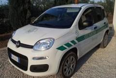 Ladri di olive: fermati in sei, recuperata la refurtiva