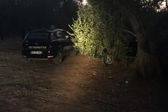 Smart rubata ritrovata imboscata in mezzo agli alberi di ulivi