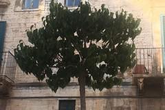 Largo Poerio, Amedeo e Savoia: Galliani denuncia scarsa manutenzione del verde pubblico