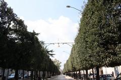 Nuovi impianti di illuminazione in viale Roma
