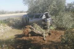Finisce con l'auto contro un albero sulla 231, salvo per miracolo