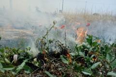 Incendio in un terreno in via Carelli: pronto l'intervento dei Vigili del Fuoco (FOTO)