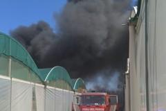 Incendio in un'azienda florovivaistica di Terlizzi, nube nera copre la città (FOTO e VIDEO)