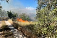 Incendio nei pressi della provinciale Terlizzi-Giovinazzo (foto)