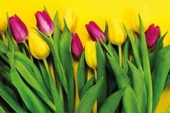 Terlizzi RoadShow i principali acquirenti mondiali alla ricerca dei fiori terlizzesi