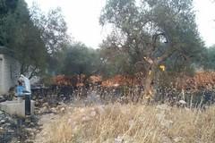 Incendio nei pressi del cimitero: in fiamme sterpaglie e alcuni ulivi