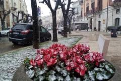 Fiocchi di neve su Terlizzi. Le FOTO