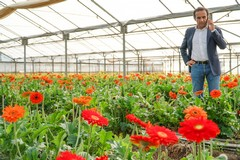 Xylella, sindaco e maggioranza inseriscono emendamento a difesa dei produttori dei fiori di Terlizzi